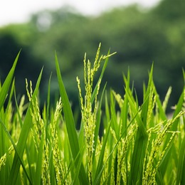 Featured flora growth grass farm hayfield field rural 3356618 ff3e18ccd9