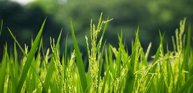 Full flora growth grass farm hayfield field rural 3356618 ff3e18ccd9